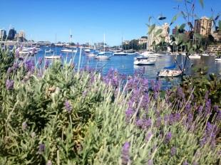 Looking across Lavender Bay